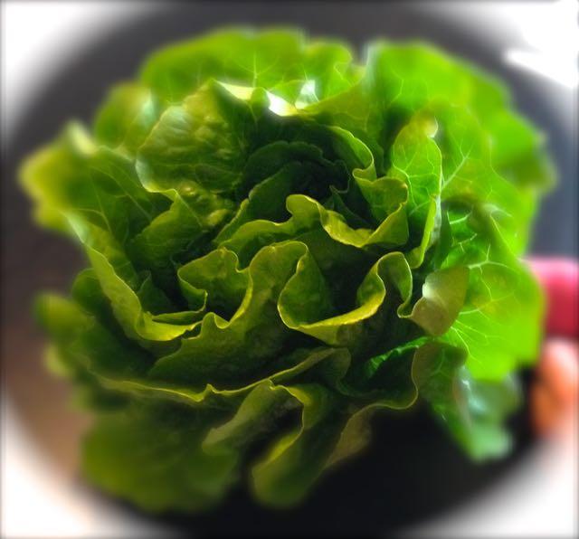 Salaatinkastikkeet – Majoneesit